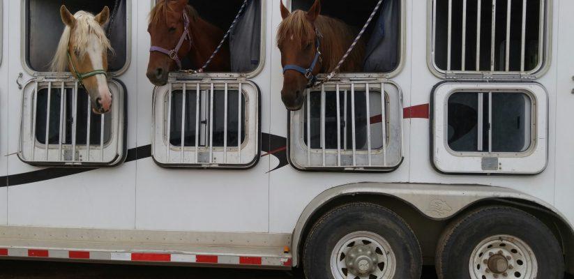 trailer paard
